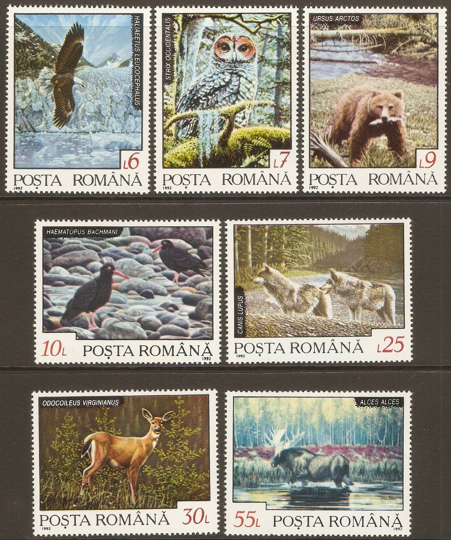 Romania 1992 Animals set. SG5478-SG5484.